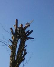 Зрізання,  валка,  обрiзка,  спилювання вирубка дерев. Умань